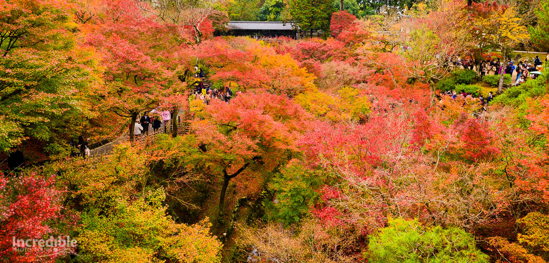 Autumn colours at Tofukuji (東福寺)