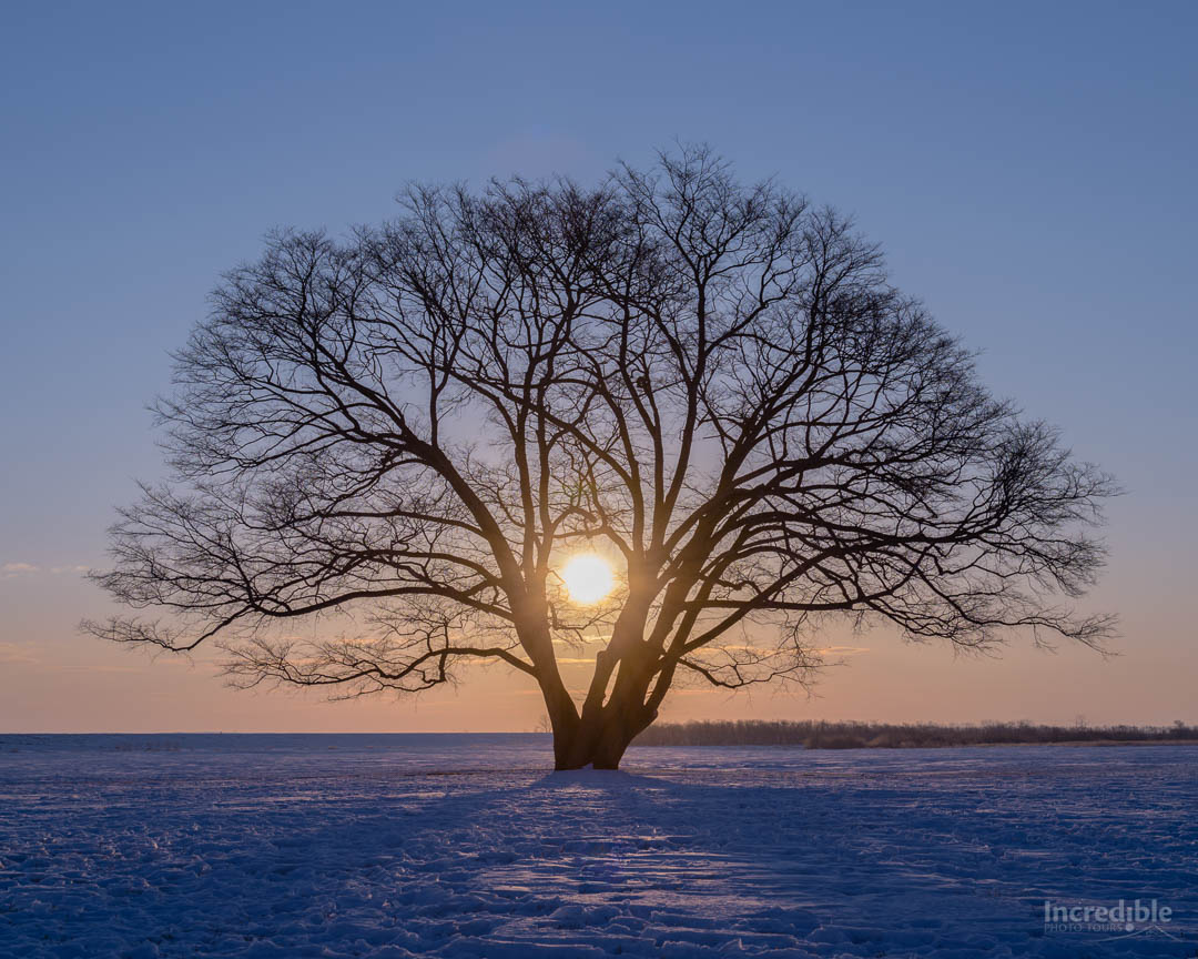 The Sunrise Tree