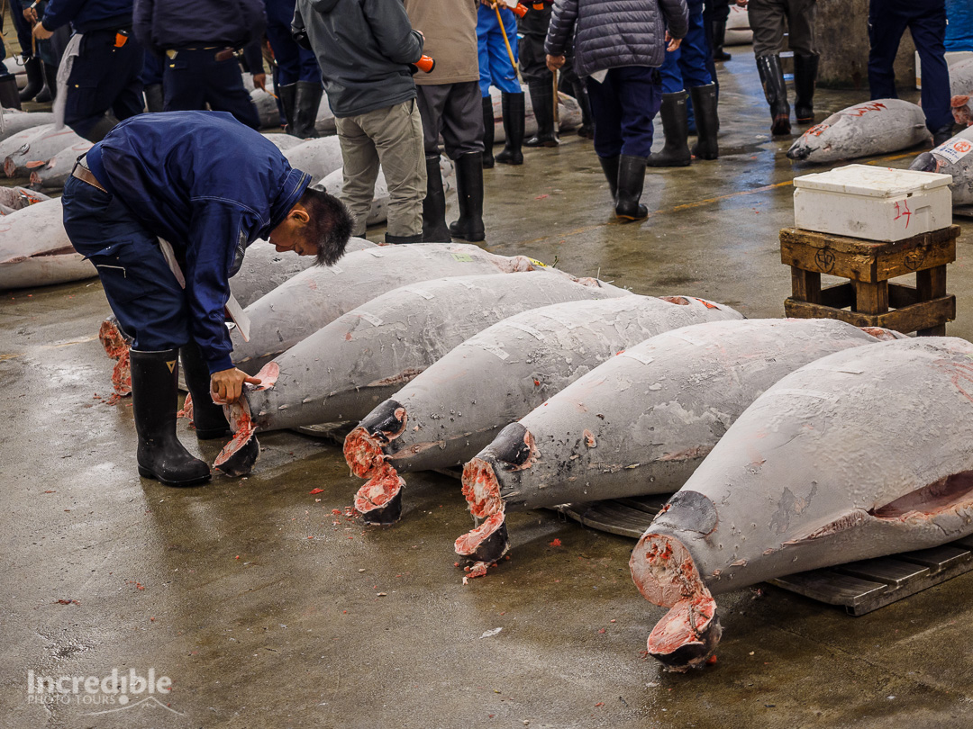 Buyer inspects tuna at Tsukiji Market.