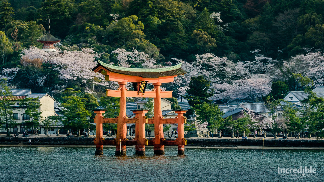 Torii gate of Itsukushima Shrine (厳島神社)