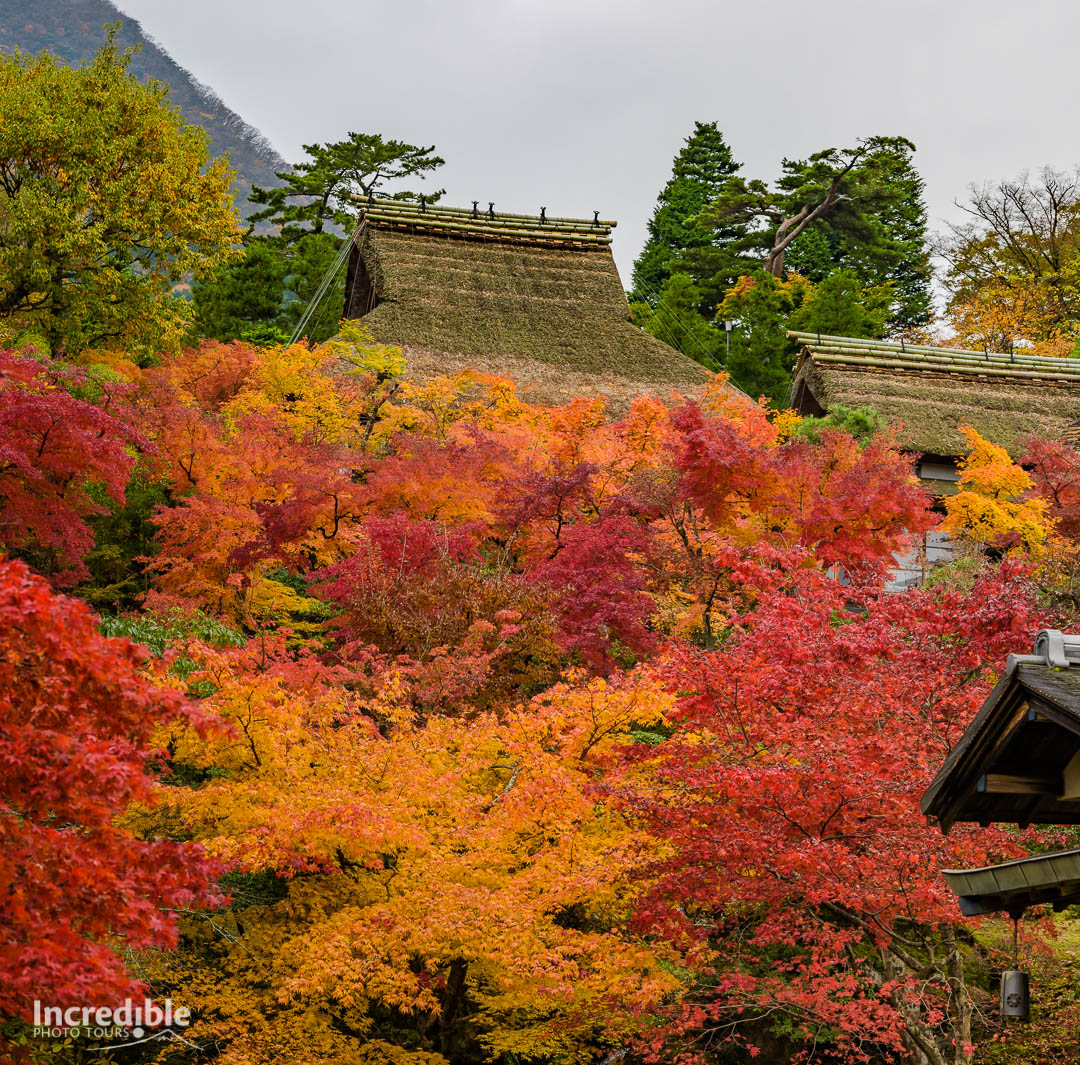 Autumn colours at the Hakone Museum of Art (箱根美術館)